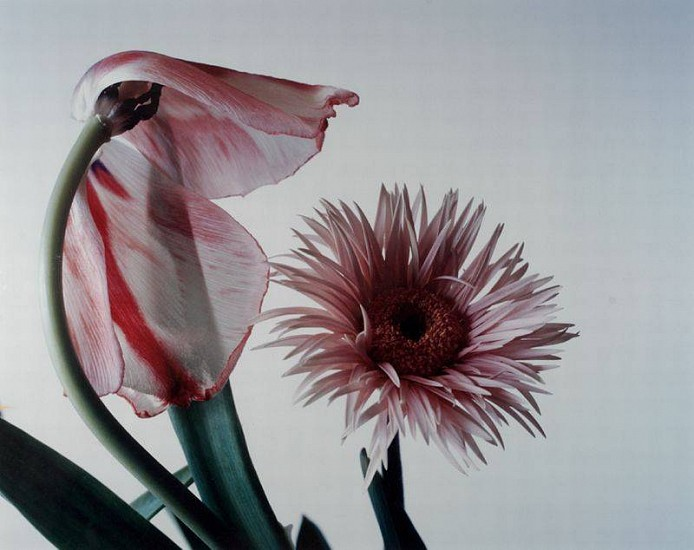 Nobuyoshi Araki, Flower (D-3) 1996, Cibachrome print (color)