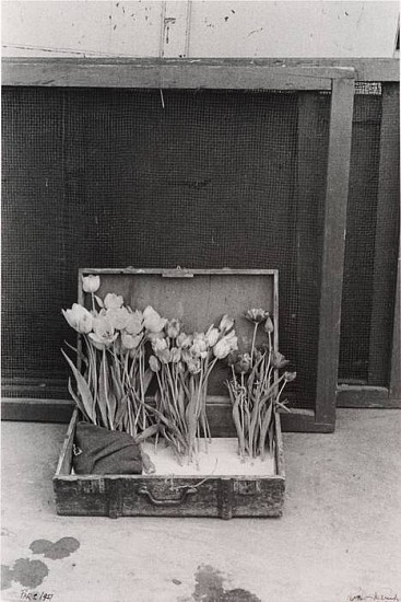 Robert Frank, Suitcase of Tulips 1950, Gelatin silver print (black & white)