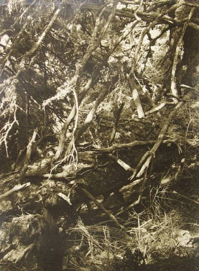 Jaromir Funke, Prales (From the Primeval Forest Cycle) 1937; Printed 1943, Gelatin silver print (black & white)