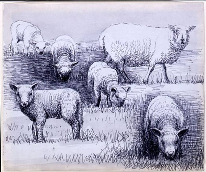 Henry Moore, Sheep Drawing 23 1972, Pen